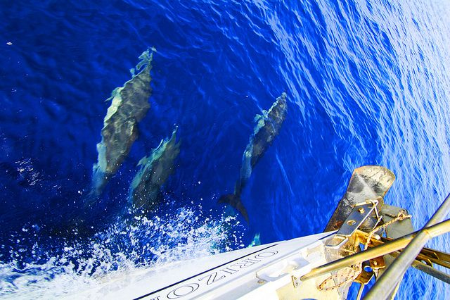 Sailing with dolphins , greece
