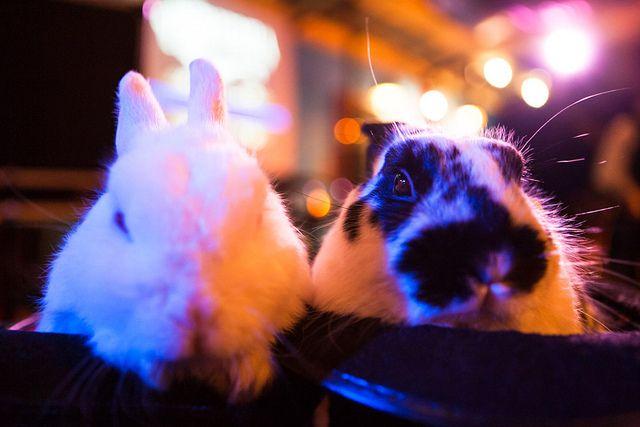 Bunnies #ormondhall #villagemelbourne #cabaretfestival