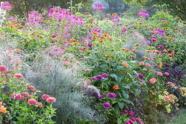 543 beste afbeeldingen over garden inspiration op for Perennial plant combination ideas