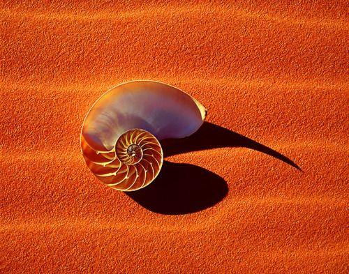 : Beach Sea Shells, Colors, Sally S Seashells, Color Orange, Seashells Treasures, Orange Crush, Betty