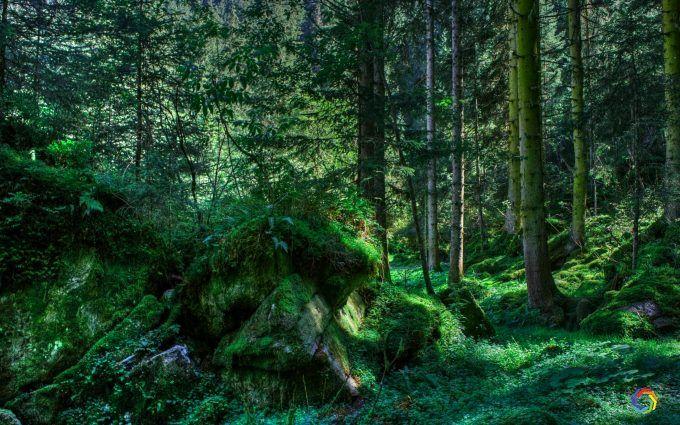 Amazing Forest Nature Full 8k Wallpaper Naturalnyj Lesnye Oboi