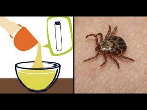 Incrível remédio caseiro para acabar com pulgas e carrapatos - Fran Adorno - YouTube