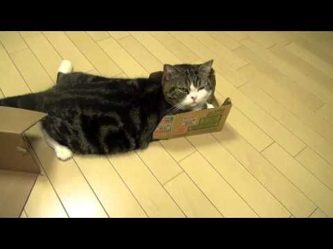 if you don't like maru, i cant be friends with you...sorry...