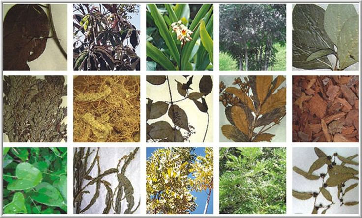 58 best images about plantas on pinterest natal sons for Jardinera plantas aromaticas