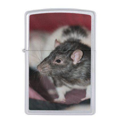 rat zippo lighter animals zippo lighter lighter rats
