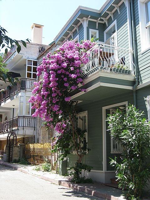 A typical island house with lilacs in Prince Islands aka Kizil Adalar.  TURKEY.