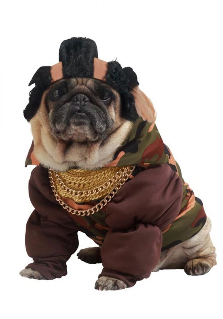 best halloween costumes for your dog get some inspiration for halloween with these awesome dog - Dogs With Halloween Costumes On