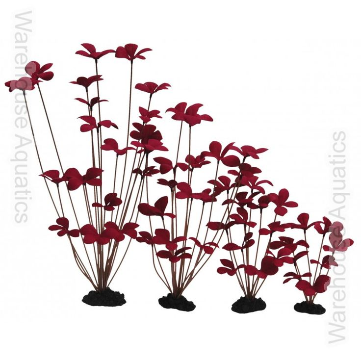 Hugo Marsilea Sp. 40cm - Silk - Ornamental Aquarium Plants