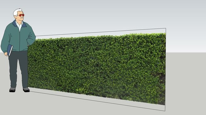 [2D] - cay hang rao dep - 3D Warehouse