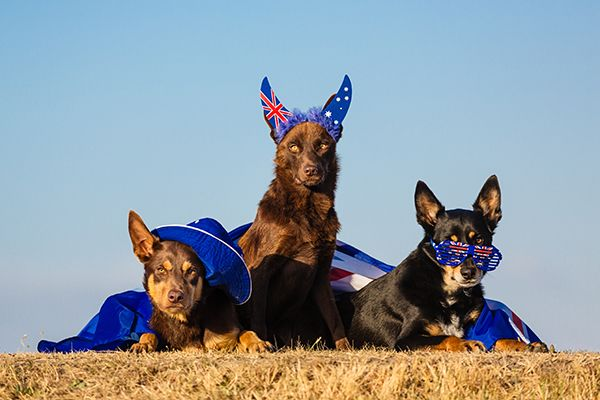 8 dogs who love being Australian on Australia Day