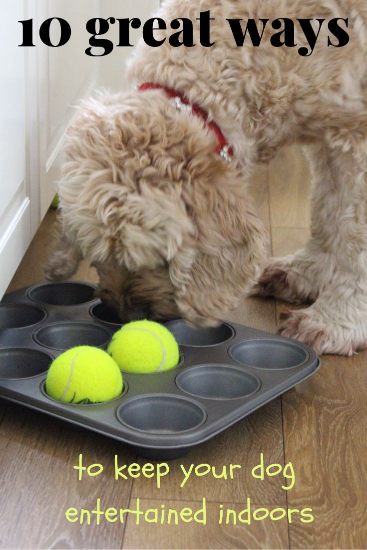how to get your dog to stop whining for food