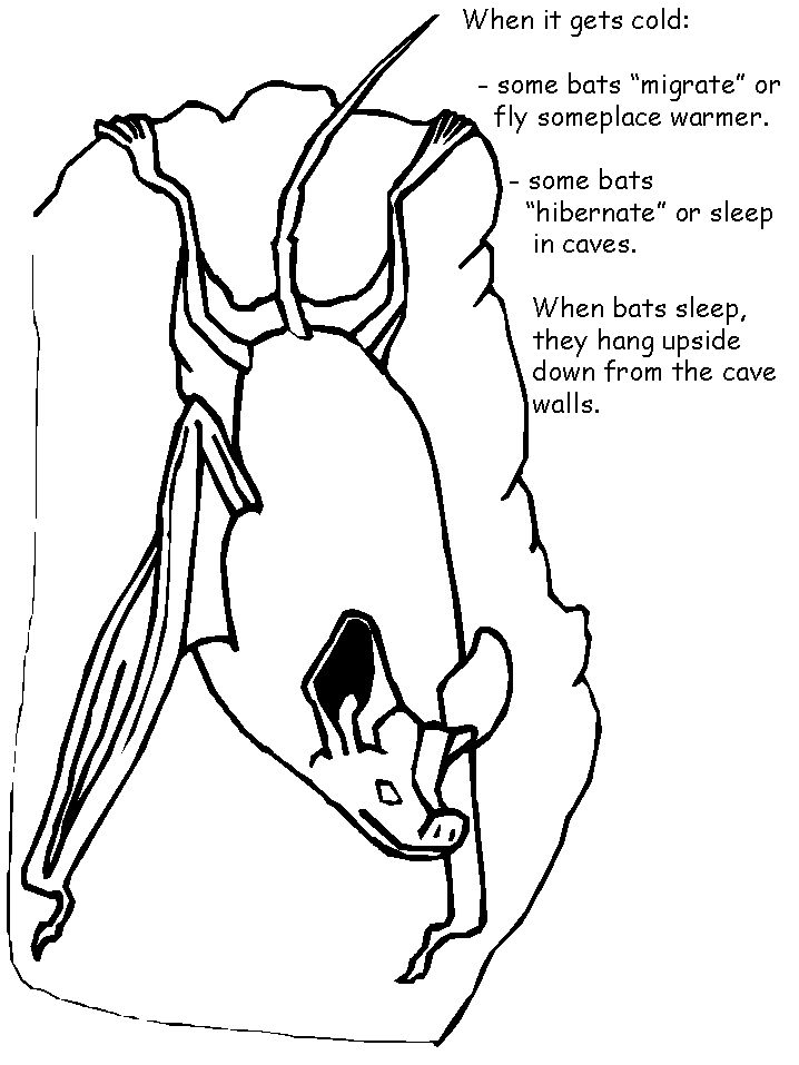 Coloring Pages Of Animals That Migrate : Coloring sheets of animals that hibernate