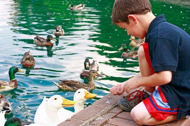 Activitati copii | Ferma