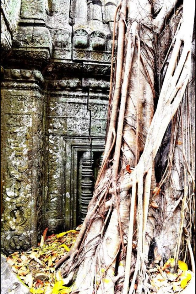 Tah Prohm temple in Cambodia #bliss