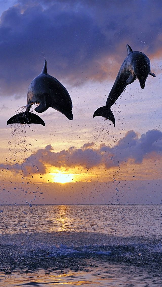 Dolphins Jumps, Honduras – Amazing Pictures - Amazing Travel Pictures with Maps for All Around the World