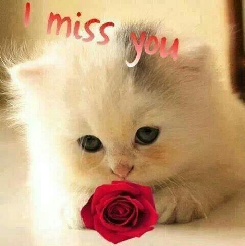 i miss you cute baby animals pinterest i miss you