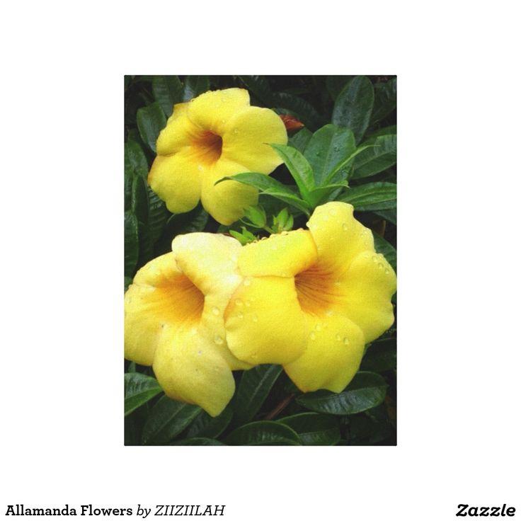 Allamanda Flowers Canvas Print