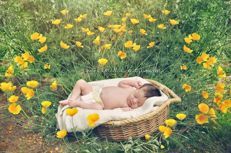 Newborn Portrait- Baby surrounded by flowers (Camellia, meet Baby: Baby Elizabeth's Summertime Debut! ~ Tacoma Newborn Photographer)