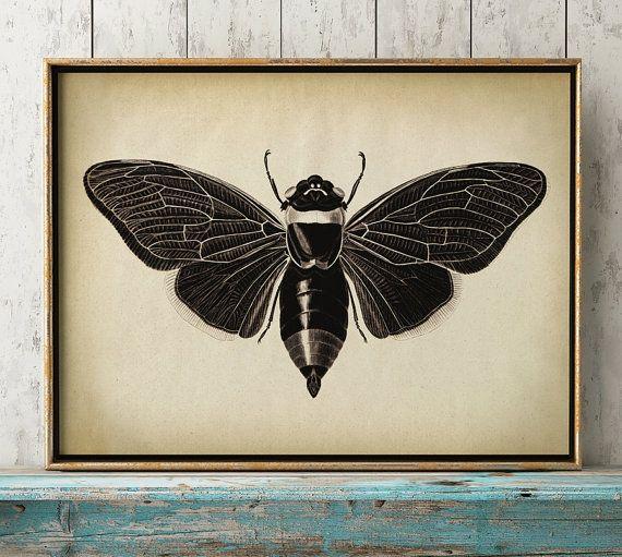 Impression d'insectes, affiche insecte papillon imprimé, affiche de papillon, papillon, tableau d'insectes, affiche mouche, insecte murale, art, vieilli sépia noir et blanc