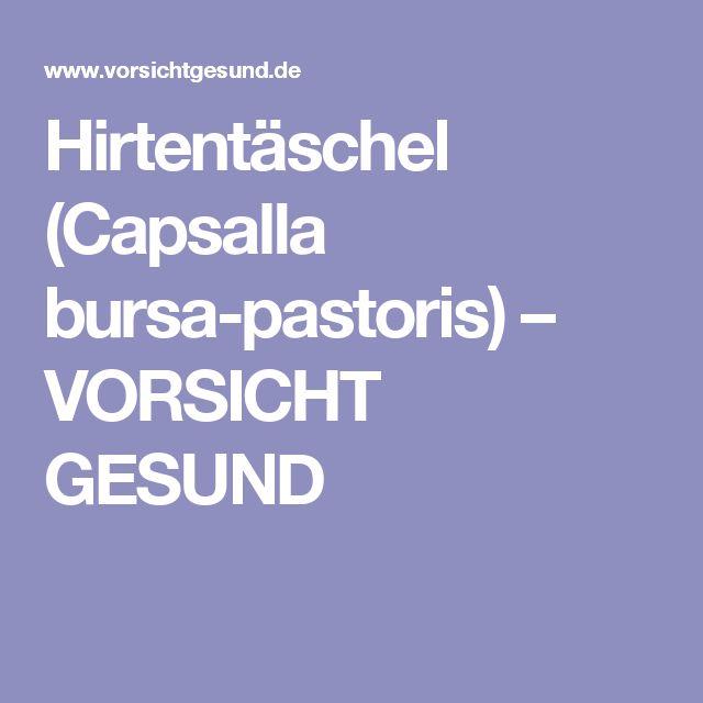 Hirtentäschel (Capsalla bursa-pastoris) – VORSICHT GESUND