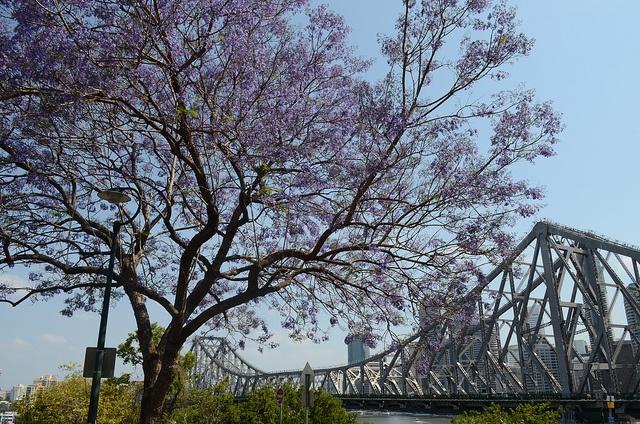 Brisbane my home, via Flickr.