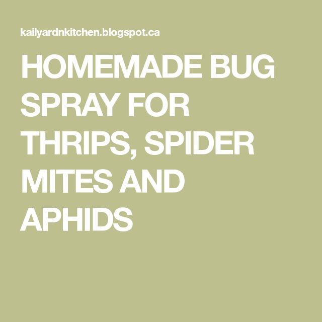 HOMEMADE BUG SPRAY FOR THRIPS, SPIDER MITES AND APHIDS