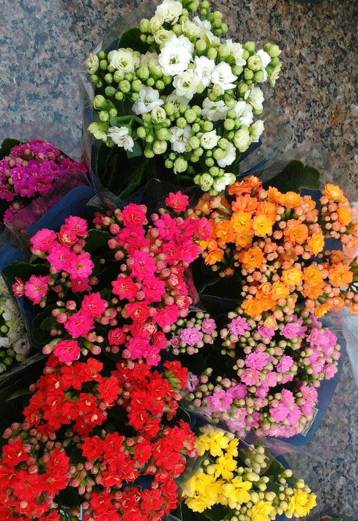 Tão Lindas 😍💐 #flores #wallpaper