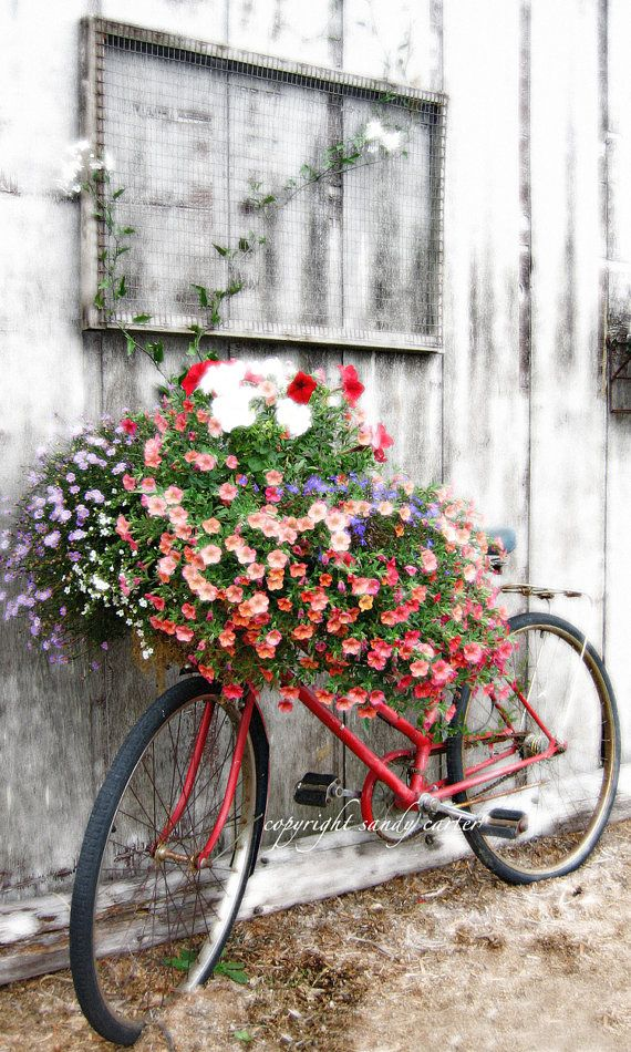 Flower Shop Bicycle by sandycarterphoto on Etsy, $50.00 I have this one in my kitchen