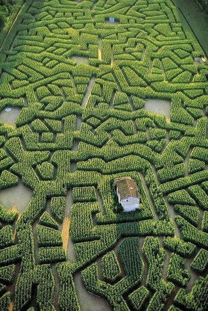Extrêmement 78 best I want a hedge maze. . images on Pinterest | Labyrinth  XA68