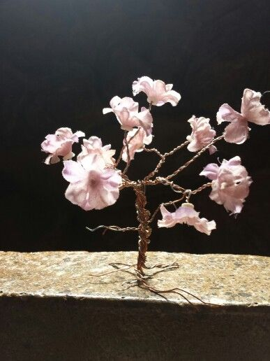 In blossom. eternity tree