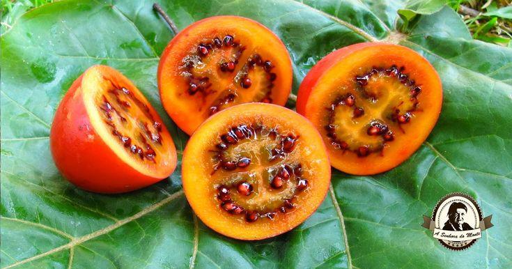 Tamarilho - Conheça este fruto enigmático. O Tamarilho pertence à espécie Solanum betaceum. É também conhecido por tomate de árvore ou tomate japonês.