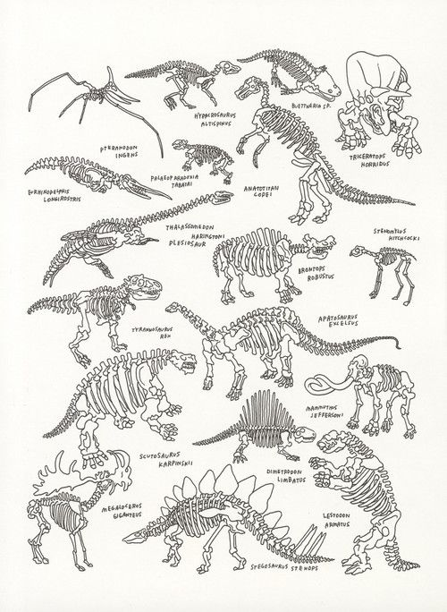 nevver:  The American Museum of Natural History, Jason Polan