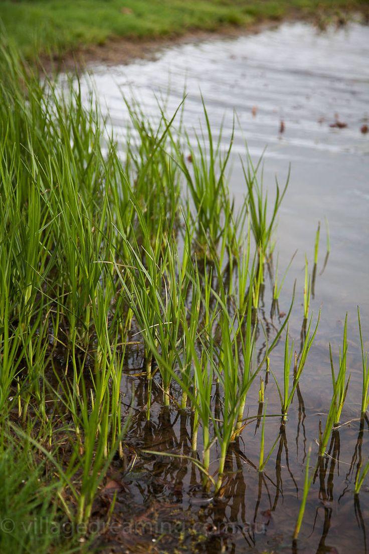 wetland detail (2 of 14)