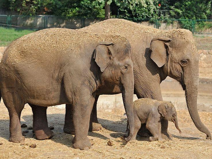 Animal Sanctuaries in Arunachal Pradesh, India @ Sanctuariesindia.com