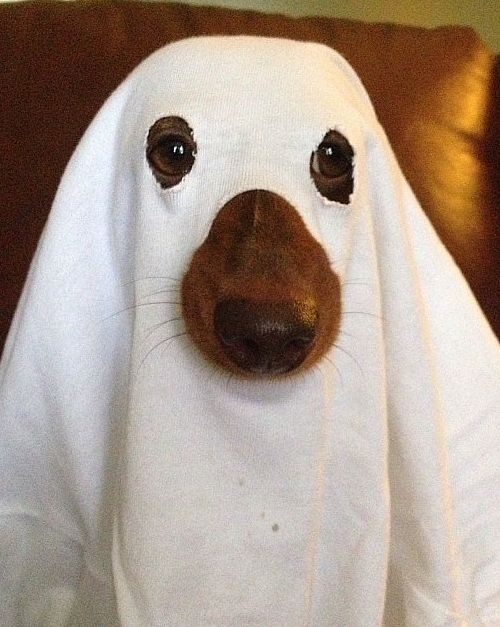 DIY Dog Halloween Costumes - Make your own Halloween costume for your dog - ghost dog costume - quick and easy last minute dog costume