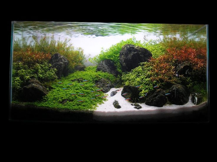 Aquascaping world competition gallery spring break in for Spring water for fish tank