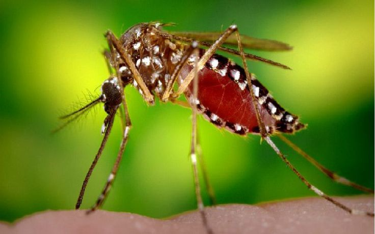 Три натуральных способа избавиться от комаров