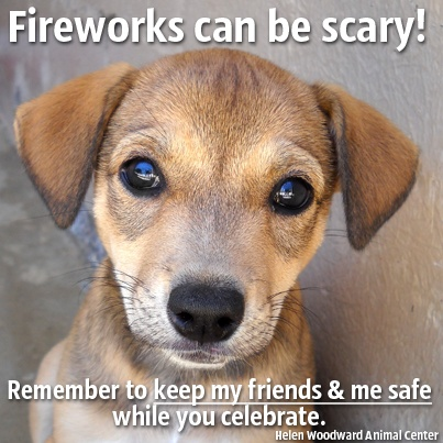 More pets will run away tomorrow than any other day this year. Keep them safe on the 4th!
