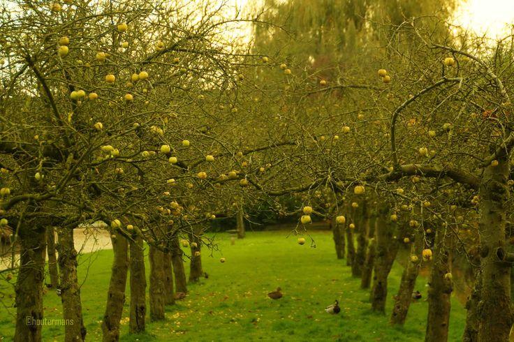 de laatste appelen