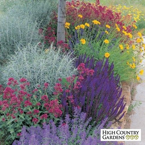 Jumbo waterwise pre planned garden design charles mann love the contrasting colors garden - Mediterranean garden plants colors and scents ...