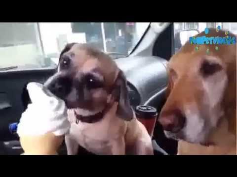Cooper Loves to eat ice cream! - YouTube