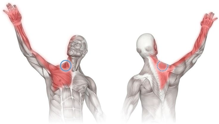 [Diagram showing areas of pain referred from the scalene muscle group. This diagram shows the possible involvement of scalenes in chest pain, upper back pain, jaw pain, face pain, headache, arm pain and hand pain.]