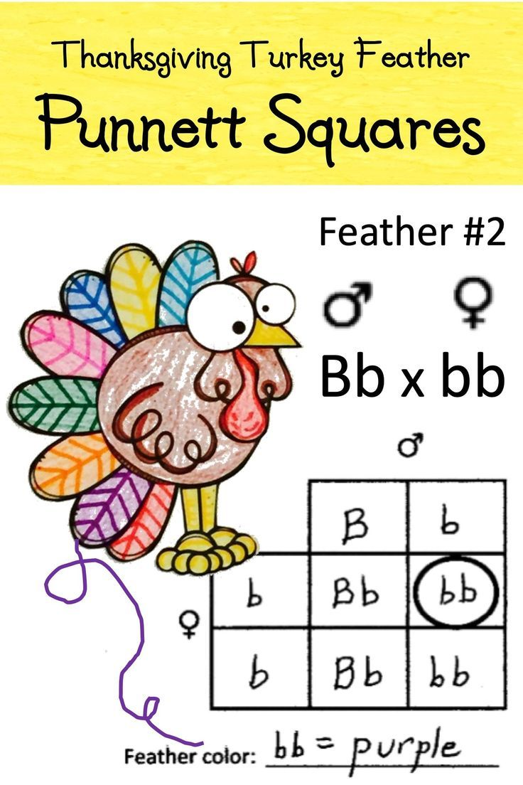 Punnett Squares With Thanksgiving Turkey Feathers Activity Worksheet Free Science Worksheets Punnett Squares Science Student