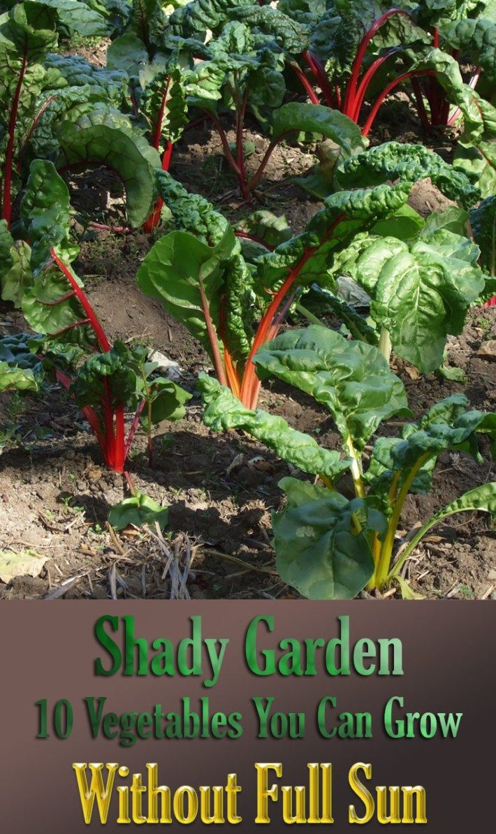 Shady Garden 10 Vegetables You Can Grow Without Full Sun 400 x 300