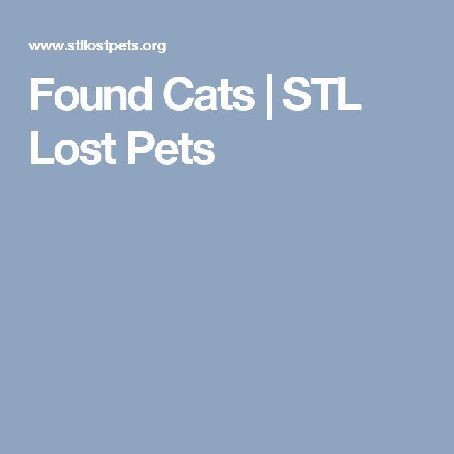 Found Cats | STL Lost Pets