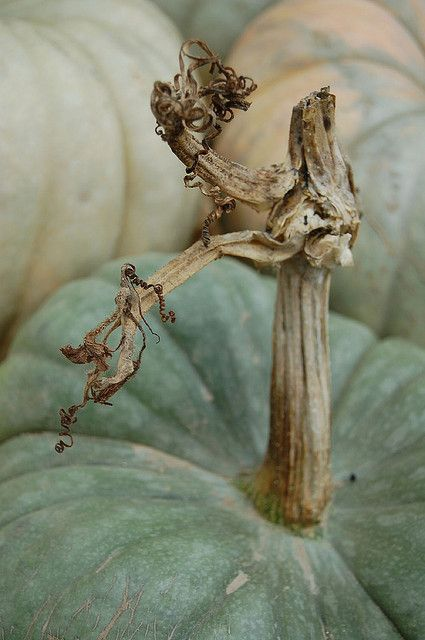 Reminds us of our velvet pumpkins with organic, natural stems. http://www.lovefeastshop.com