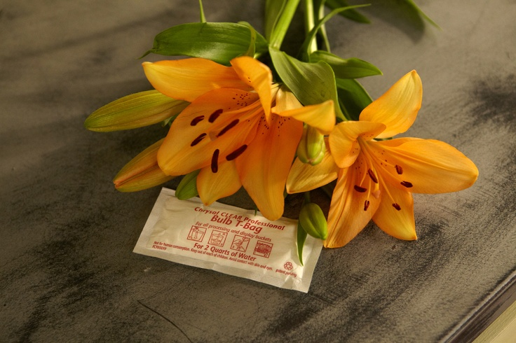 Different Types Of Flowers Need Different Types Of Flower Food Bulb Flowers Like Tulips