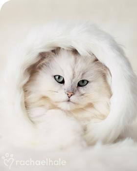 Color Malibu #blanco #white. Ron de coco Malibu www.facebook.com/malibuespana