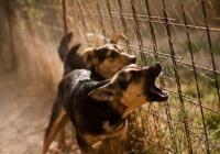 Cesar Millan's Best Tips to Stop Dog Barking | Cesar Millan