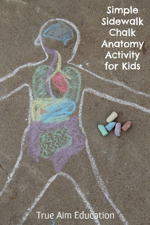 Simple Sidewalk Chalk Anatomy Activity for Kids - This hands-on science activity helps children understand where all the parts they learn about fit into their own little bodies.